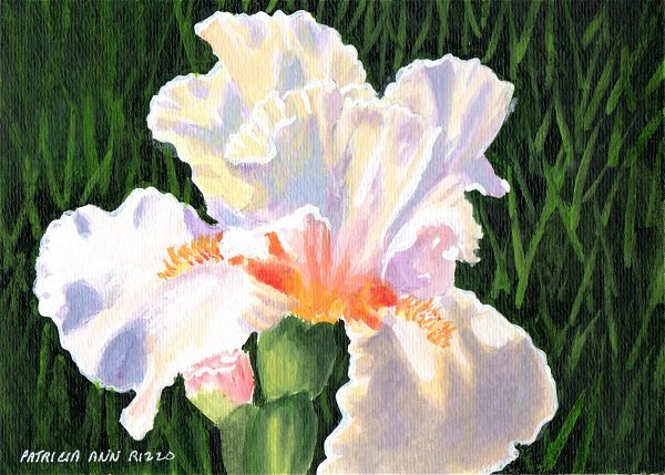 """Luminous Iris"" original fine art by Patricia Ann Rizzo"