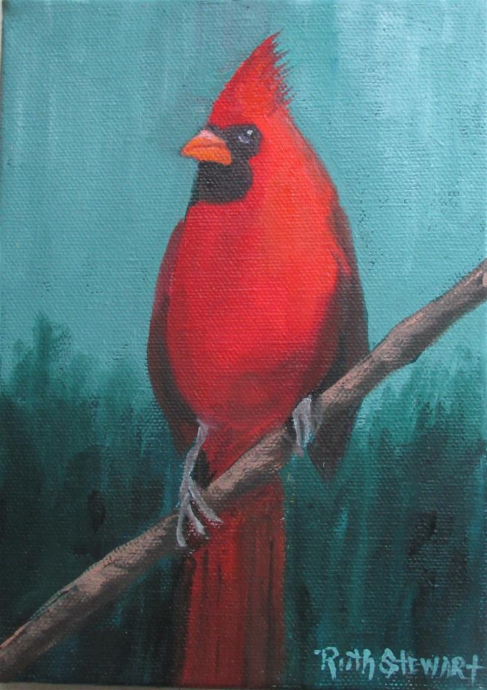 """""""Papa Cardinal"""" original fine art by Ruth Stewart"""