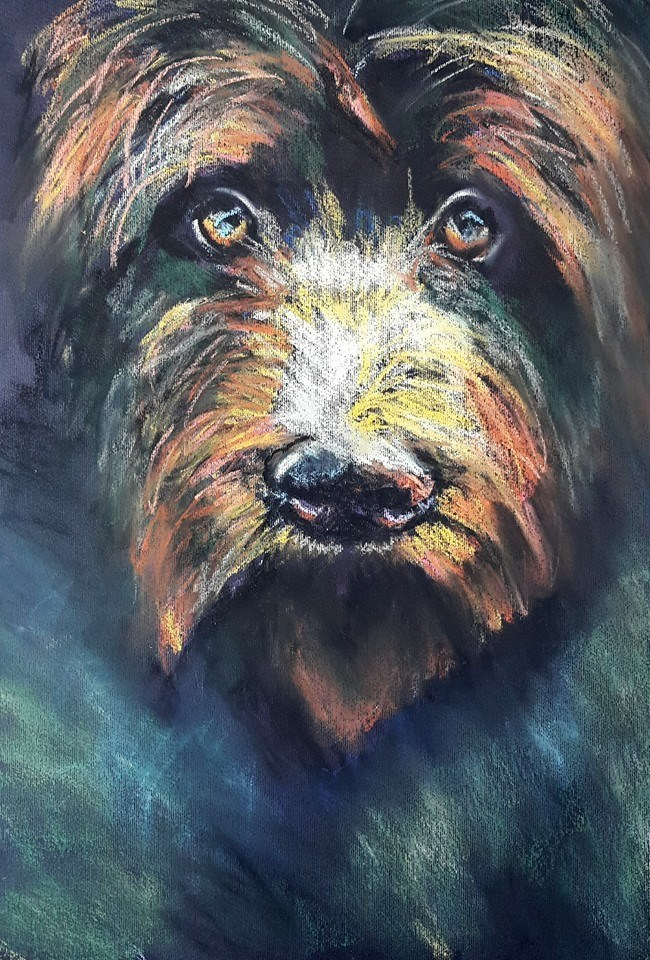 """""""Steekbaard"""" original fine art by Rentia Coetzee"""