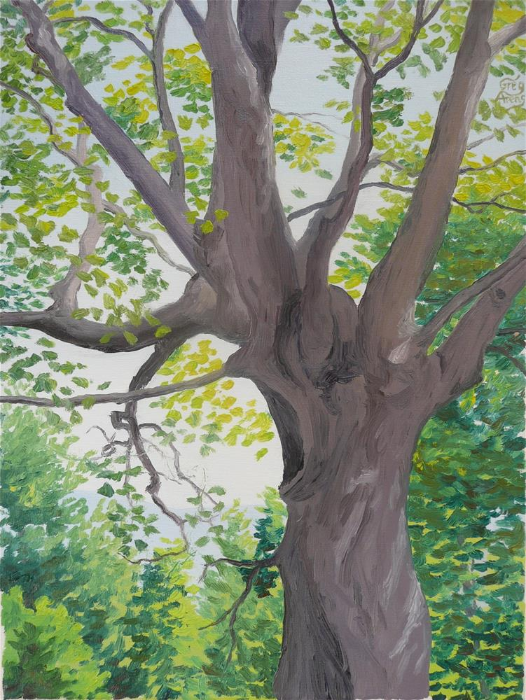 """Twisted Maple"" original fine art by Greg Arens"