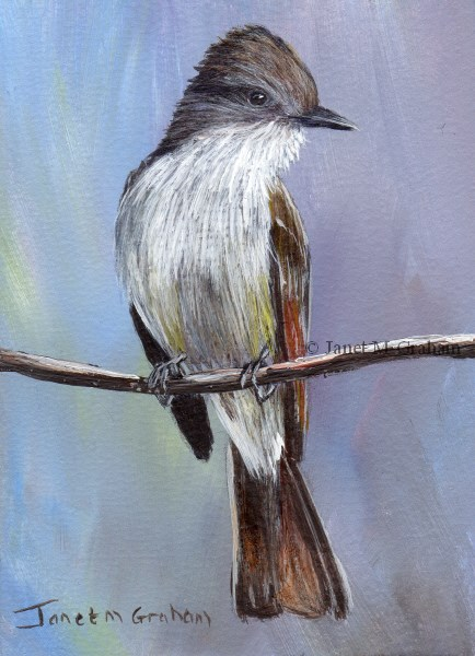 """""""Ash Throated Flycatcher ACEO"""" original fine art by Janet Graham"""