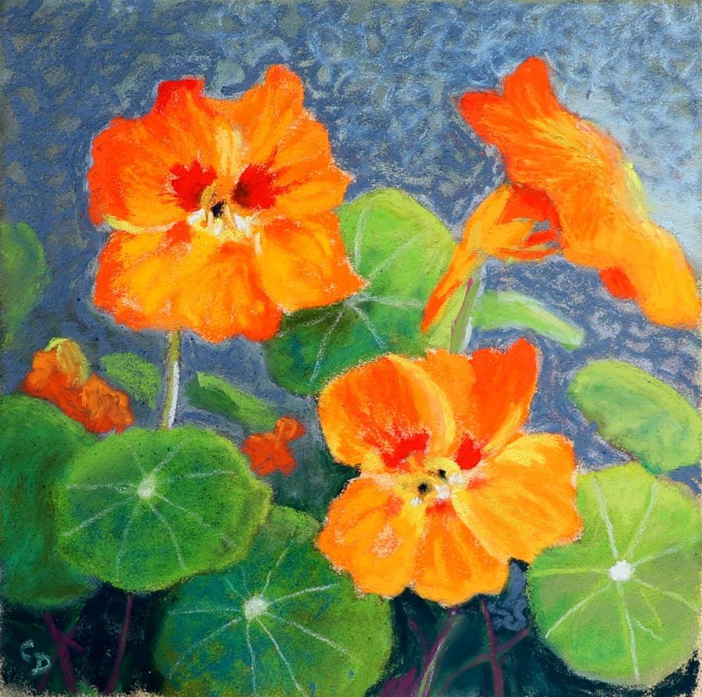 """""""Nasturtiums"""" original fine art by Christine Derrick"""