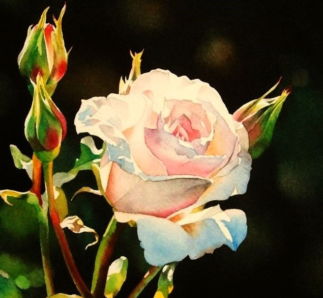 """Shell Pink Rose"" original fine art by Jacqueline Gnott, whs"
