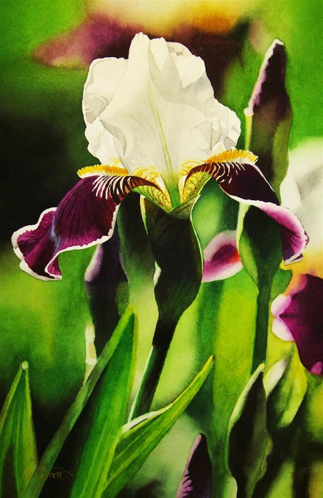 """Bi-Color Iris, Dark Purple & White"" original fine art by Jacqueline Gnott, whs"