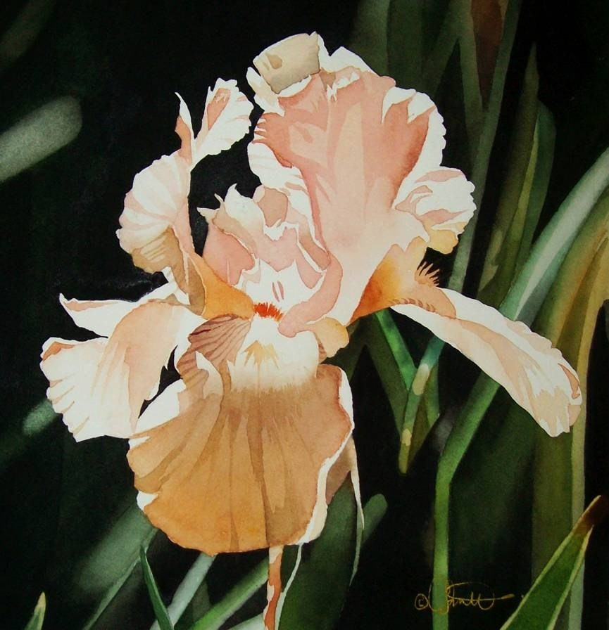 """Peach Iris"" original fine art by Jacqueline Gnott, whs"