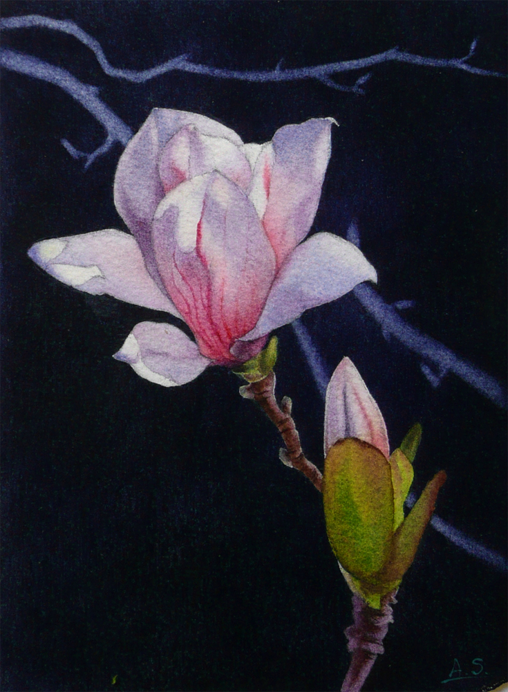 """Blooming Magnolia"" original fine art by Arena Shawn"