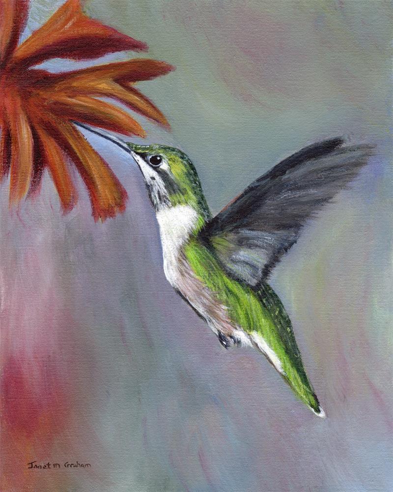 """Ruby Throated Hummingbird"" original fine art by Janet Graham"