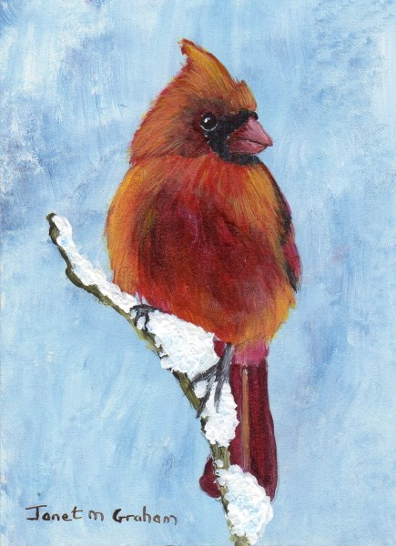"""Red Cardinal ACEO"" original fine art by Janet Graham"