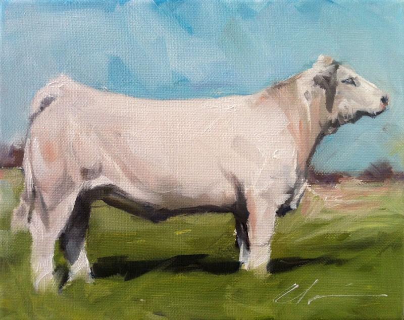 """""""Charolais Cow"""" original fine art by Clair Hartmann"""