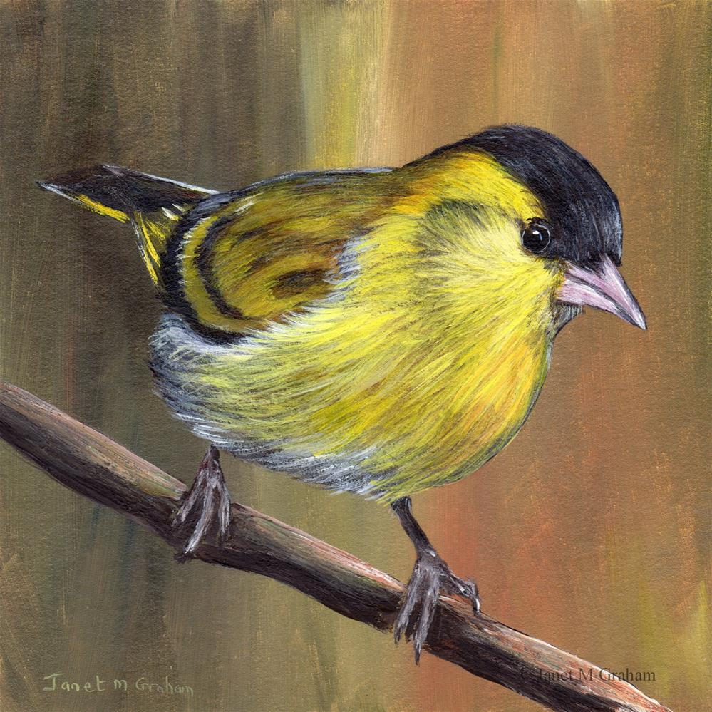 """Siskin No 2"" original fine art by Janet Graham"