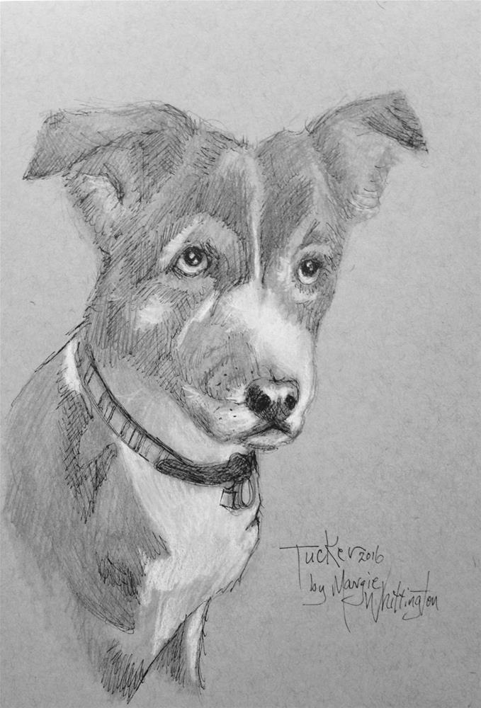 """Tucker"" original fine art by Margie Whittington"