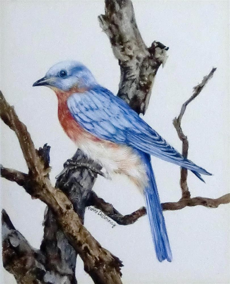 """Eastern Bluebird"" original fine art by Jean Pierre DeBernay"