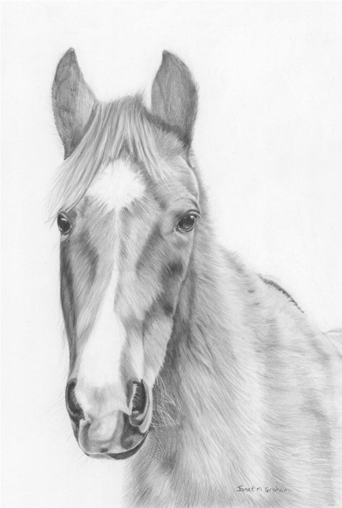"""Horse"" original fine art by Janet Graham"
