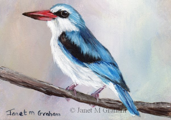 """Woodland Kingfisher ACEO"" original fine art by Janet Graham"
