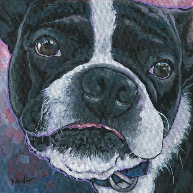 """""""Boston Terrier"""" original fine art by Nadi Spencer"""