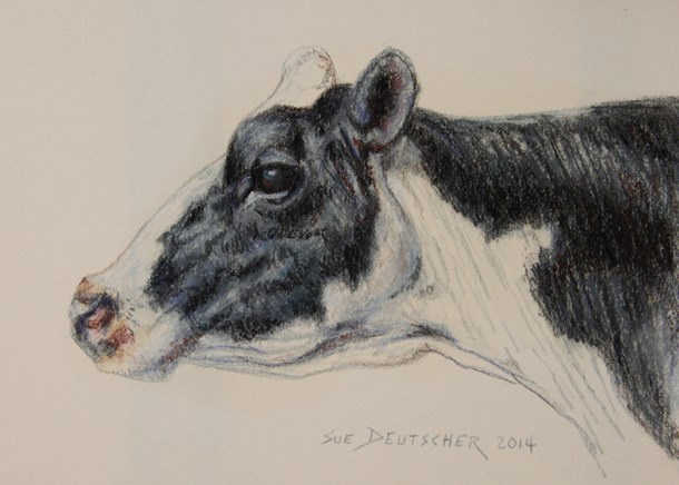 """Holstein Dairy Cow"" original fine art by Sue Deutscher"