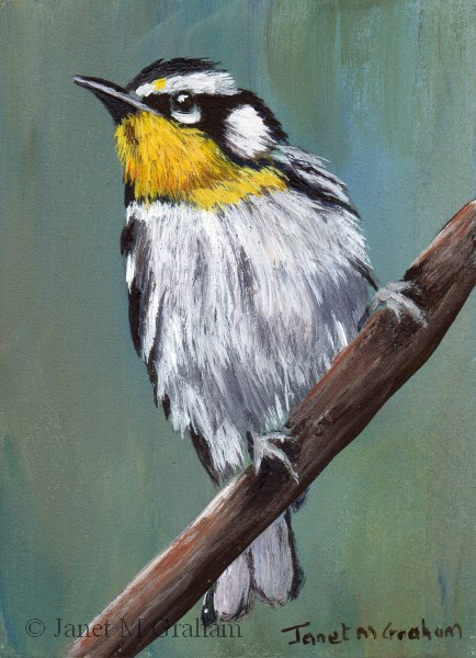 """Yellow throated Warbler ACEO"" original fine art by Janet Graham"