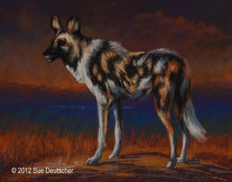 """""""African Wild Dog"""" original fine art by Sue Deutscher"""