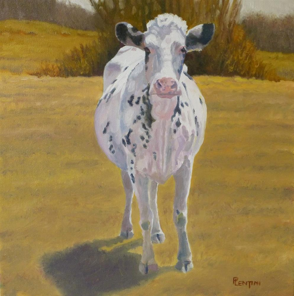 """Cow Series 6 Standing Pied"" original fine art by Peter Lentini"