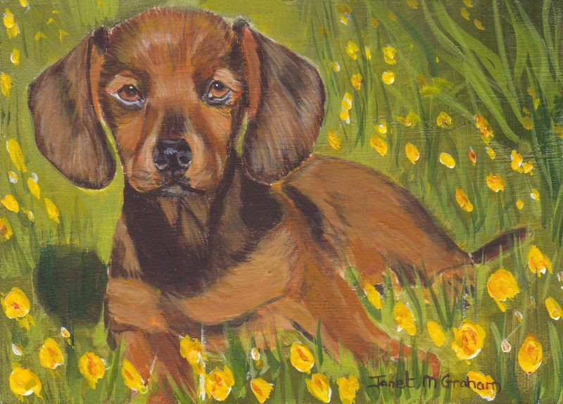 """Dachshund ACEO"" original fine art by Janet Graham"