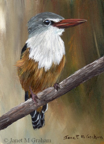 """Grey Headed Kingfisher ACEO"" original fine art by Janet Graham"