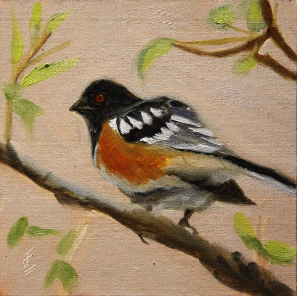 """Spotted Towhee"" original fine art by Jane Frederick"