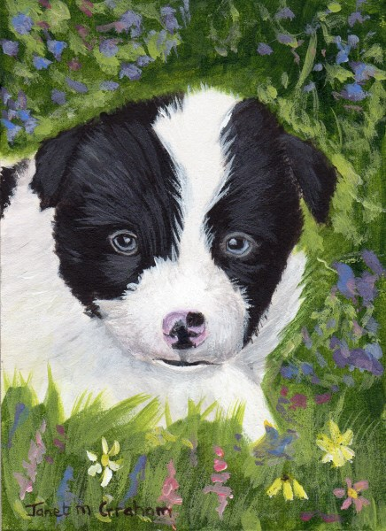"""Puppy ACEO"" original fine art by Janet Graham"