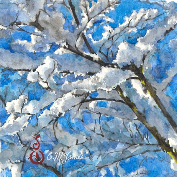 """Snowy Branches in the Sunlight #2"" original fine art by Catherine M. James"