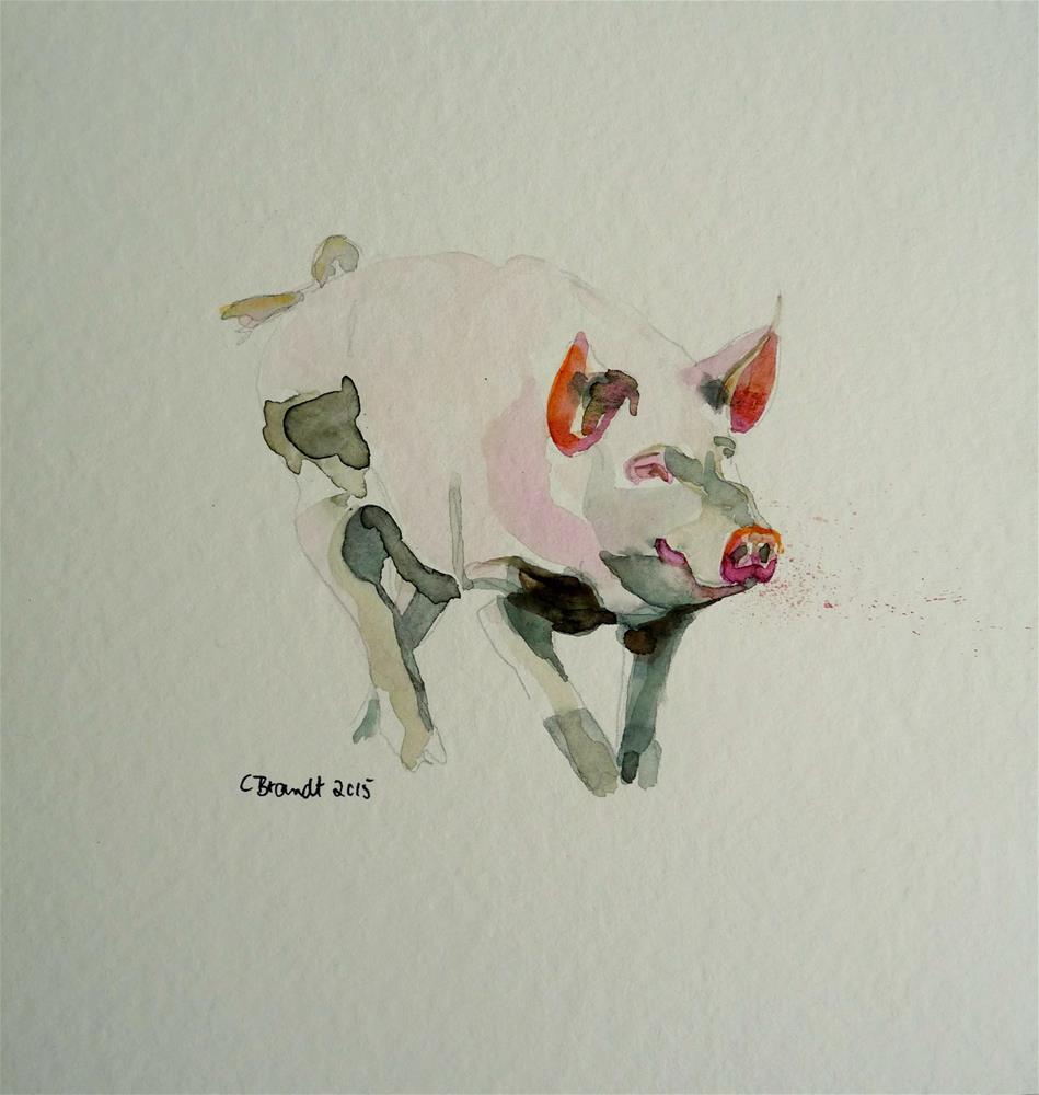"""pig"" original fine art by Claudia Brandt"