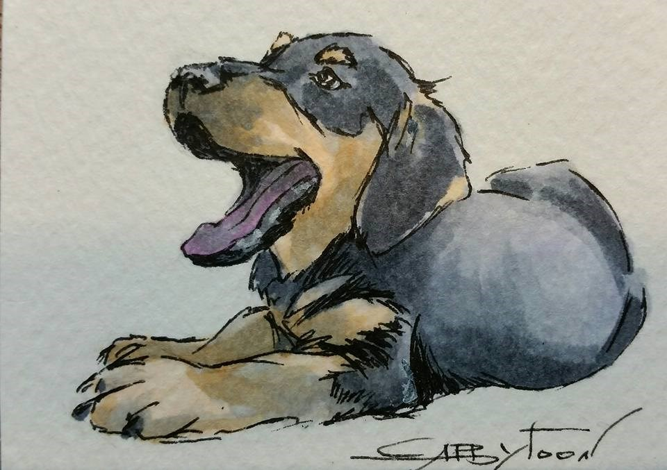 """Shelby"" original fine art by Gabriella DeLamater"