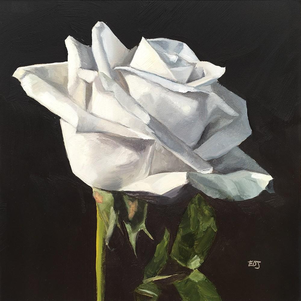 """White Rose 1"" original fine art by Elizabeth Dawn Johnston"