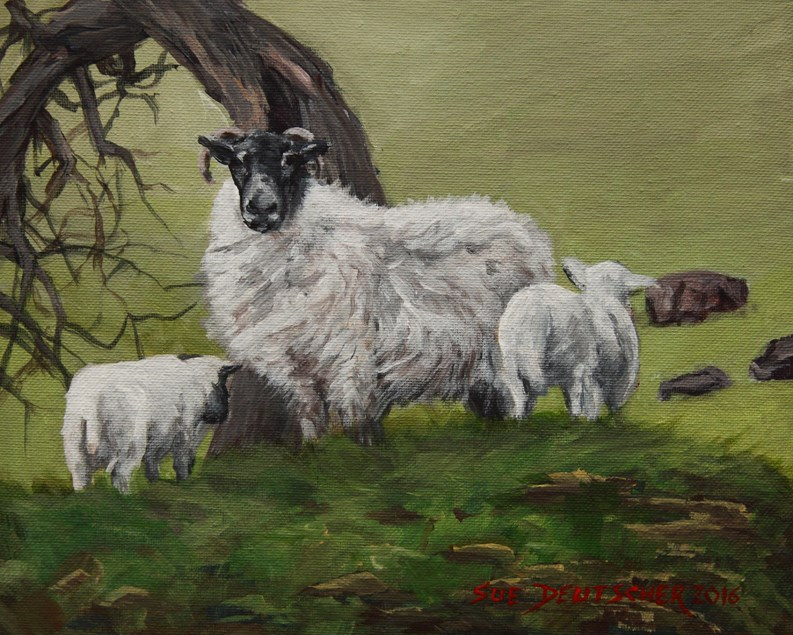 """Scottish Blackface Sheep"" original fine art by Sue Deutscher"