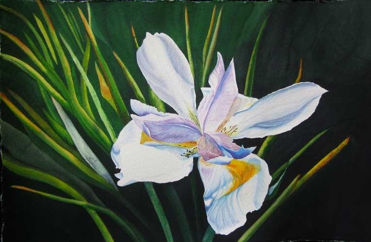 """Radiant & Wild, Iris"" original fine art by Teresa Beyer"
