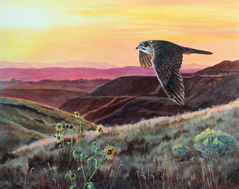 """Dawn Patrol - Prairie falcon"" original fine art by Catherine Temple"