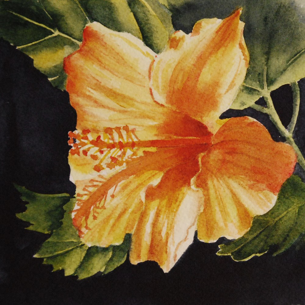 """Hibiscus"" original fine art by Mary Anderson"