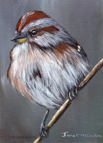 """American Tree Sparrow ACEO"" original fine art by Janet Graham"