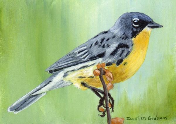 """Kirtland's Warbler ACEO"" original fine art by Janet Graham"