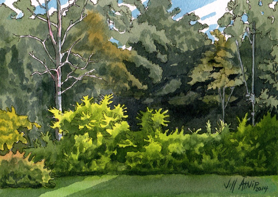 """Backyard Study"" original fine art by Jeff Atnip"