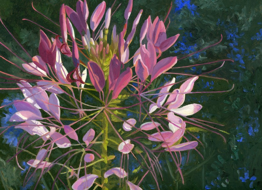 """Cleome and Larkspur"" original fine art by Nancy Herman"