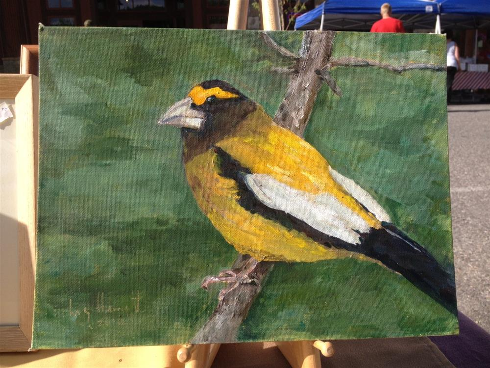 """Evening Grosbeak"" original fine art by Lucy Hammett"