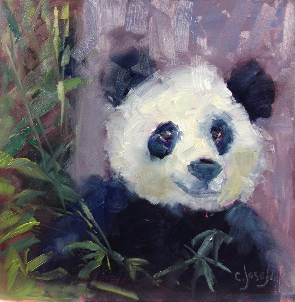 """Panda"" original fine art by Carol Josefiak"