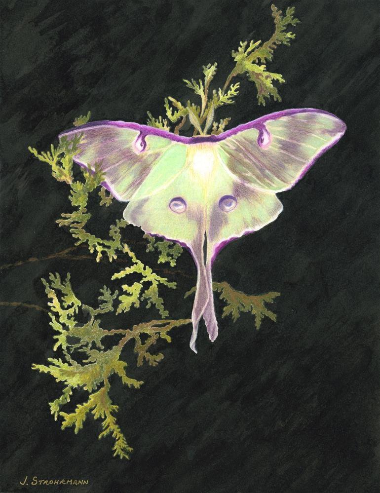 """Gossamer Wings of the Luna Moth"" original fine art by Jeanne Strohrmann"