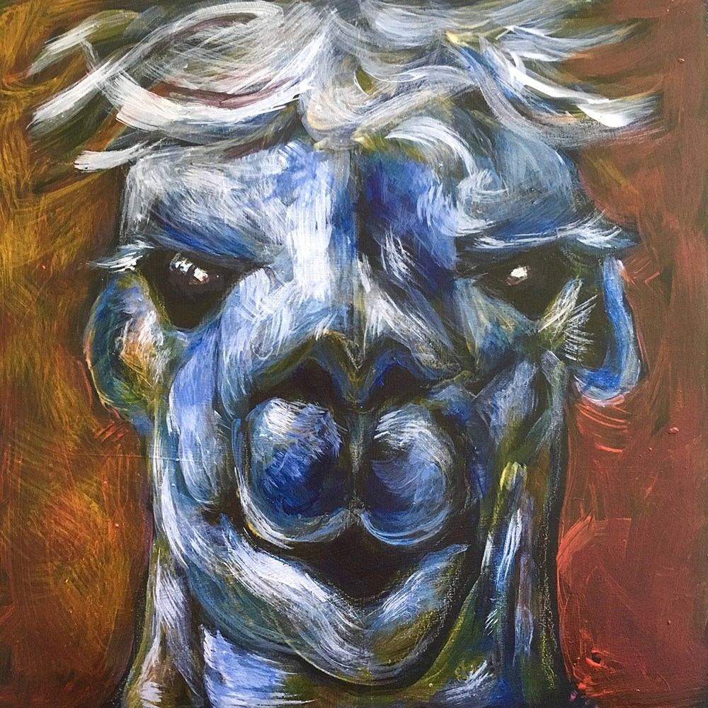 """Alpaca"" original fine art by Colleen OHair"