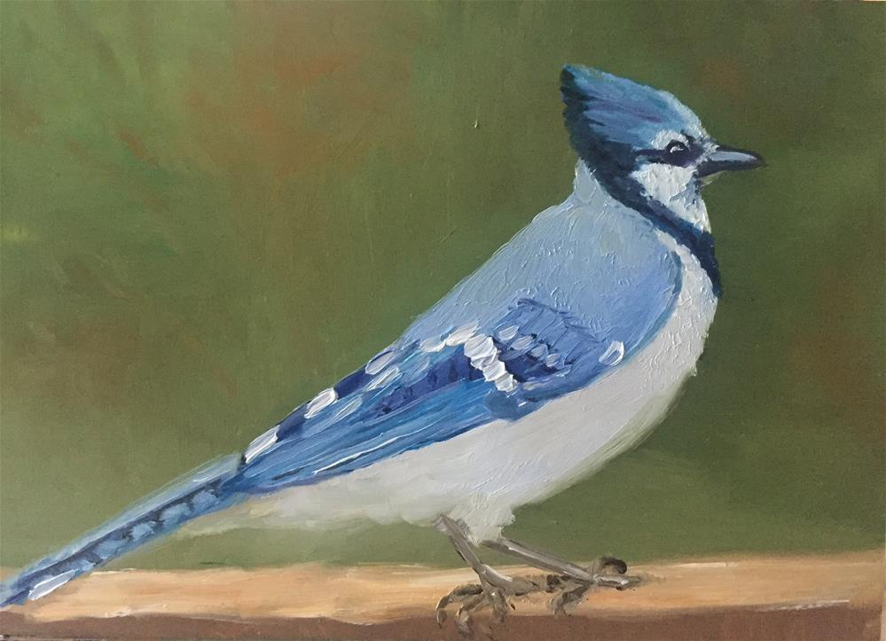 """blue jay"" original fine art by Carole Chalmers"