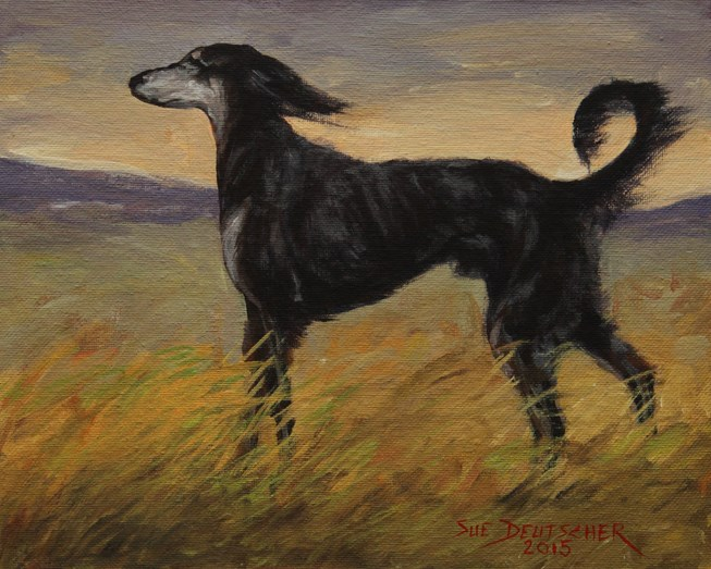 """Saluki"" original fine art by Sue Deutscher"