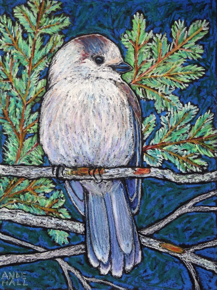 """Rachel's Gray Jay"" original fine art by Ande Hall"