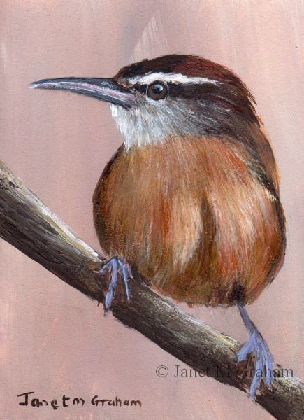"""Long Billed Wren ACEO"" original fine art by Janet Graham"