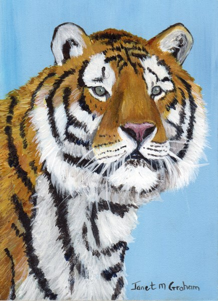 """Tiger ACEO"" original fine art by Janet Graham"