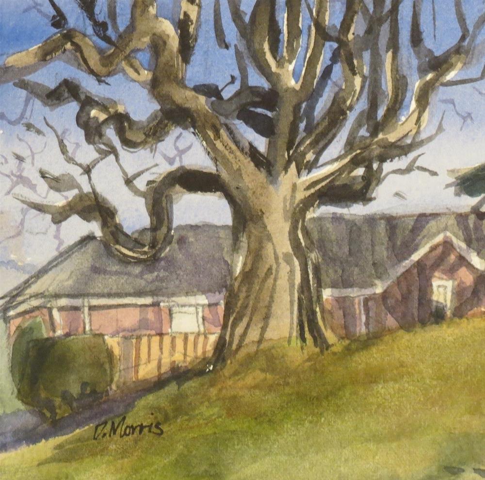 """""""Winter Oak"""" original fine art by Dann Morris"""