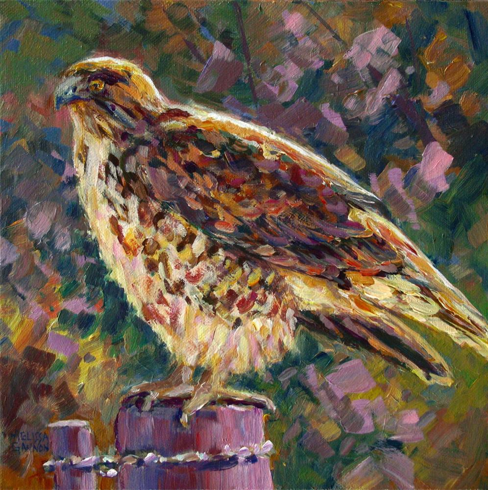 """Country Hawk"" original fine art by Melissa Gannon"